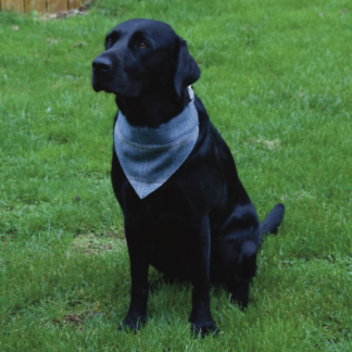 Holly Dog Bandana